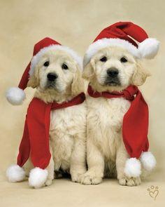 santa puppies - OMG! Seriously how cute!