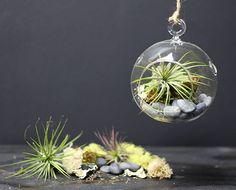 Air Plant Terrarium Kit From National Craft Society — National Crafts Society