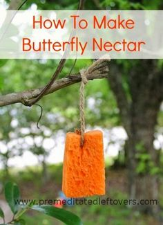 Best DIY Projects: How to Make Butterfly Nectar