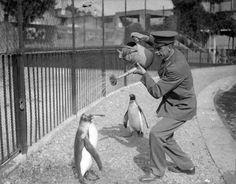動物たちとともに・・・昔の人が動物と一緒に撮ったシュールな古写真 : カラパイア