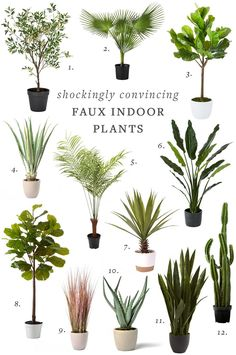 Good and Convincing Faux Indoor Plants OMG. These Faux Indoor Plants are Shockingly Good & ConvincingOMG. These Faux Indoor Plants are Shockingly Good & Convincing Small Fake Plants, Fake Plants Decor, House Plants Decor, Big Plants, Real Plants, Faux Plants, Exotic Plants, Plant Decor, Hanging Plants
