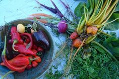 Tips on Greenhouse Winter Gardening from MissingWillow