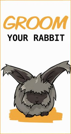 Learn everything you need to know about grooming your rabbit. Including clipping their nails, brushing them, and cleaning their ears. Mini Lop Bunnies, Pet Bunny Rabbits, Pet Rabbit, Cute Bunny, Giant Rabbit, Bunny Bunny, Outdoor Rabbit Hutch, Indoor Rabbit, Rabbit Anatomy
