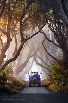 One from a few weeks back captured in Autumn light of the wonderful Dark Hedges in Co Antrim, Northern Ireland with some on coming traffic. Landscape Photos, Landscape Photography, Places Around The World, Around The Worlds, Historia Universal, New Holland Tractor, Autumn Lights, Old Tractors, Magical Forest