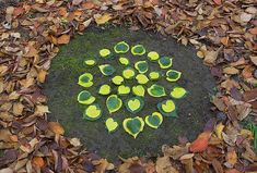 Land art.  Now that I have a yard!