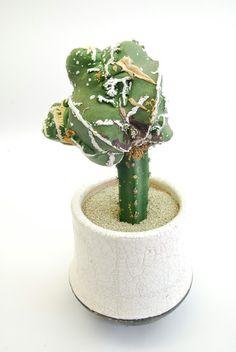 白条碧鸞モンストローサ Astrophytum myriostigma v. nudum f.