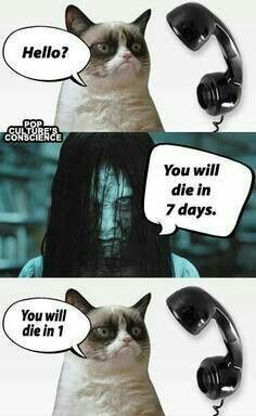 Top 18 Best Grumpy Cat Memes Can anything brighten a day quite like a funny cat? These hilarious cat memes are guaranteed to make you crack a smile. Hope you enjoy them and don't forget to share to your friends! Grumpy Cat Quotes, Funny Grumpy Cat Memes, Cat Jokes, Funny Memes, Funny Cat Quotes, Funniest Memes, Humor Quotes, Funny Minion, Memes Humor