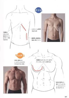 Reference Guide for Drawing Male Muscles – 160 fotografías Body Reference Drawing, Human Poses Reference, Guy Drawing, Anatomy Reference, Drawing Poses, Body Anatomy, Anatomy Art, Anatomy Drawing, Human Anatomy