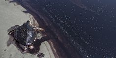 The BP oil spill, often called the worst man-made environmental disaster of our time, first began four years ago today. On April 20, 2010, BP's Deepwater Horizon drilling platform exploded, causing more than 200 million gallons of oil to spew into th...