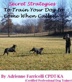 """Does your dog come when called or is he sort of in a """"mom, not right now""""? state of mind. Learn the secrets to an almost perfect recall."""