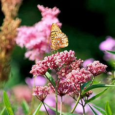 With a name like swamp milkweed, you know this plant loves wet soil: http://www.bhg.com/gardening/flowers/perennials/flowers-for-wet-soil/?socsrc=bhgpin053114swampmilkweed&page=20