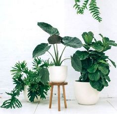 38 The Best Design Of Ornamental Plants At Home
