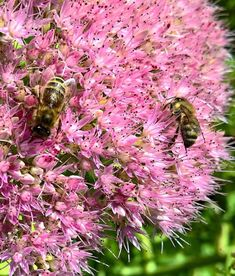 5 Plants for Your Garden to Help Save the Bees