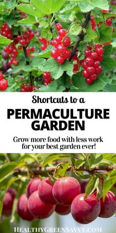 Contemporary Garden Design Heard of permaculture but not sure how you might use it in your home garden? This quickstart guide to home permaculture will help you apply basic permaculture principles for a more productive garden with less work. Permaculture Principles, Permaculture Design, Permaculture Garden, Edible Plants, Edible Garden, Horticulture, Foundation Planting, Olive Garden, Organic Gardening Tips