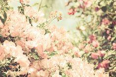 Flowers Tumblr Photography 23