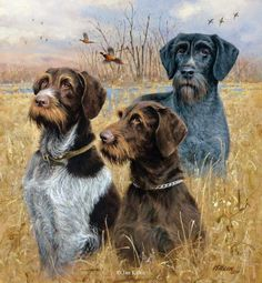 """Dogs II"""" - Drahthaars -Pointers and setters Pointing Dog Paintings ..."""