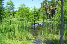 Oldsmar is a haven for outdoor enthusiasts with of the city dedicated to recreational parks and preserves. Oldsmar Florida, Clearwater Florida, Tampa Bay Area, Free Vacations, Tree Forest, Sunshine State, Parks And Recreation, Cool Places To Visit, Preserves