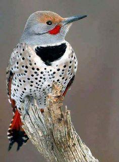 %D8%B7%D9%8A%D9%88%D8%B14.jpg (450×613) Beautiful birds