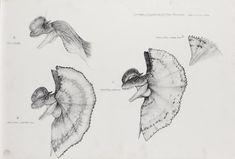 Jurassic Park Dilophosaurus head drawings