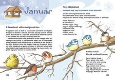Feeding Birds In Winter, Amazing Nature, Bird Feeders, Kindergarten, Poems, Language, Science, Album, Activities