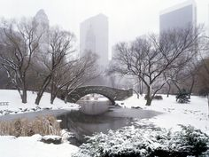 Central park in winter wallpapers and images - wallpapers, pictures ...