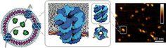 GENIO Italiano Giuseppe Cotellessa: Nanovesicles With DNA Nanopores for…