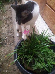 Uma nova flor no paraíso. Kiki foi conferir a mais nova habitante do nosso jardim.
