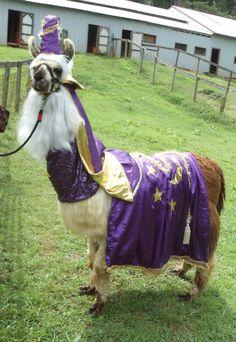 Llama, Twist as Merlin a costume I made for a customer.