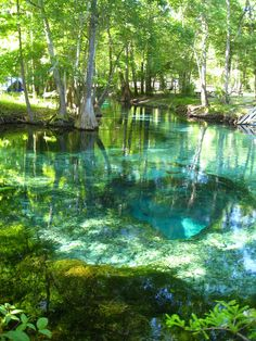 Turquoise Pool, Ginnie Springs, Florida I grew up swimming here. Everyone should experience this once in their life. The water is rushing out of the cavern in the middle, fresh spring water, so fast you can't swim into the cave. The water feeds the river. This spring also appeared in Southern Living. It's amazing. I miss my Florida home.