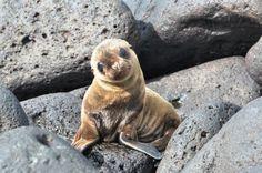 baby sea lion so so cute