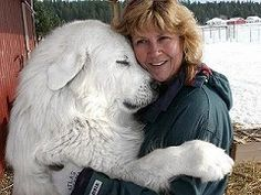 great pyrenees - very sweet and loving fuzzballs. Also very large. :) Had one! They are wonderful.