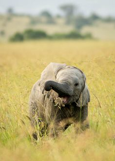 This chap, who wants to share lunch with you. | 15 Baby Elephants We Would Like To Be Best Friends With