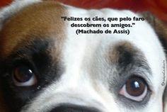 """""""Felizes os cães, que pelo faro descobrem os amigos."""" (Machado de Assis)"""