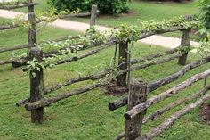 williamsburg Garden Fence | Espalier trees are the coolest thing ever, aren't they? We purchased ...