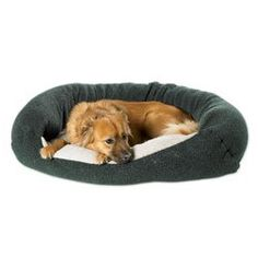 Bowsers Reversible Lounger Dog Bed in Navy NavyOatmeal XLarge 48in x 28in ** Check out this great product.