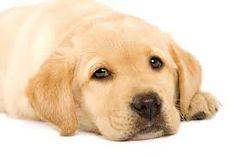 sfondi cani cuccioli - Cerca con Google