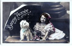 Poodle Dog, hand tinted real photo pc posted 1911. I think it looks like a Maltese <3