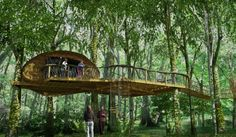 Treehouse Experience – Loved by