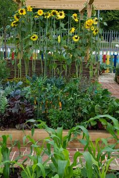 Sunflower Garden Ideas hollyhocks and sunflowers garden for around each end of garden boxes We Did Sunflowers Last Yeari Hope To Do Them Again This Year
