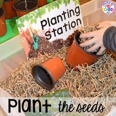 Plant seeds in the Garden Shop Dramatic Play for a spring theme, Mother's Day theme, or summer theme when everything is growing and blooming. Any preschool, pre=k, and kindergarten kiddos will LOVE it (and learn a ton too). #flowershop #gardenshop #presschool #prek #dramaticplay