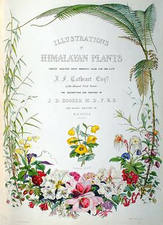 Title page of Joseph Dalton Hooker's 'Illustrations of Himalayan plants' (1855)