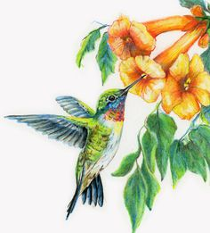 Diane Wright Art Journal: Colored Pencil - Birds