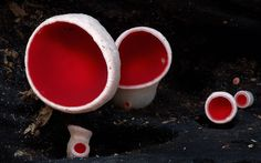 The Magical World Of Mushrooms In Macro Photography By Steve Axford   Bored Panda
