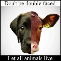 Let all animals live.