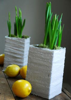 flores y plantas Archives - Página 5 de 10 - Decoratrix | Blog de decoración, interiorismo y diseño