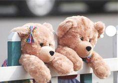 Beary Cute !!!