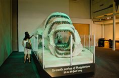 Megalodon: Largest Shark that Ever Lived: One of the exhibit's most popular modules-a series of four Megalodon jaws from 30 to 60-foot-long sharks is a perfect backdrop for family photos.