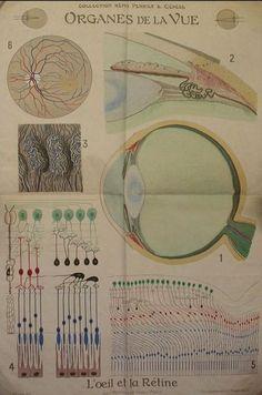 ocular chart at hunterian