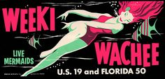 Weeki Wachee Florida Vintage Looking Souvenier bumper sticker - abouy Old Florida, Vintage Florida, Florida Girl, Florida Keys, Miami Florida, Weeki Wachee Florida, Weeki Wachee Mermaids, Florida Springs, Palm Springs