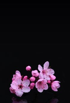 99 melhores imagens de Plano de fundo (flor) | Planos de fundo ...